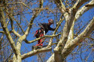 obrezovanje drevesa