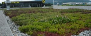 Izdelava zelene strehe